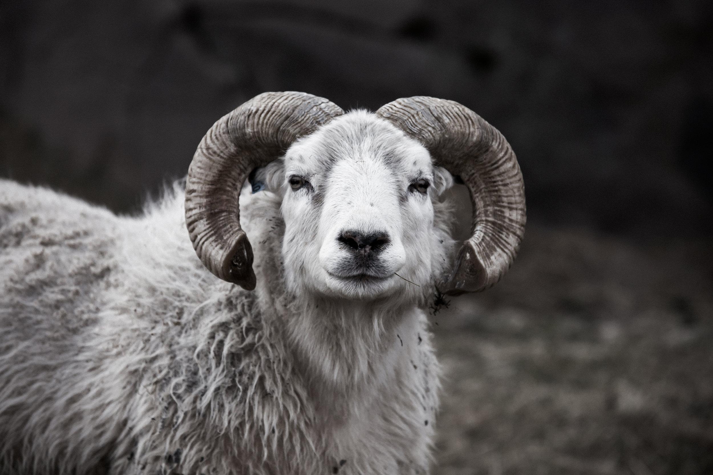 Ram Untouched