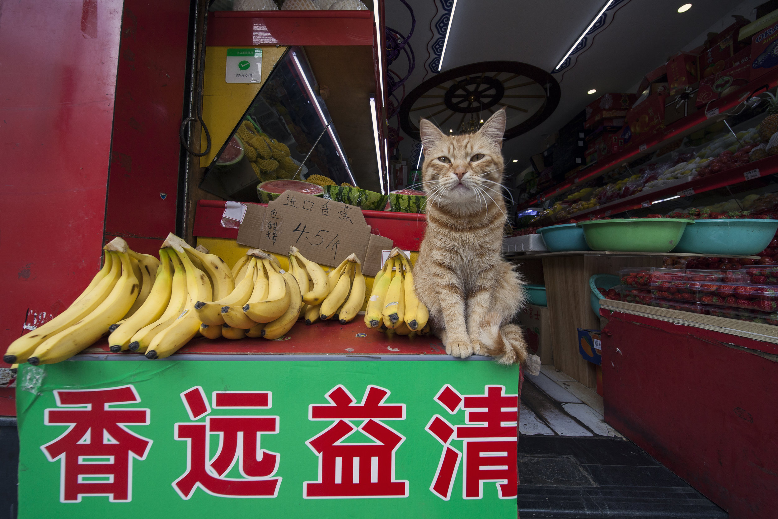 Cat and Bananas