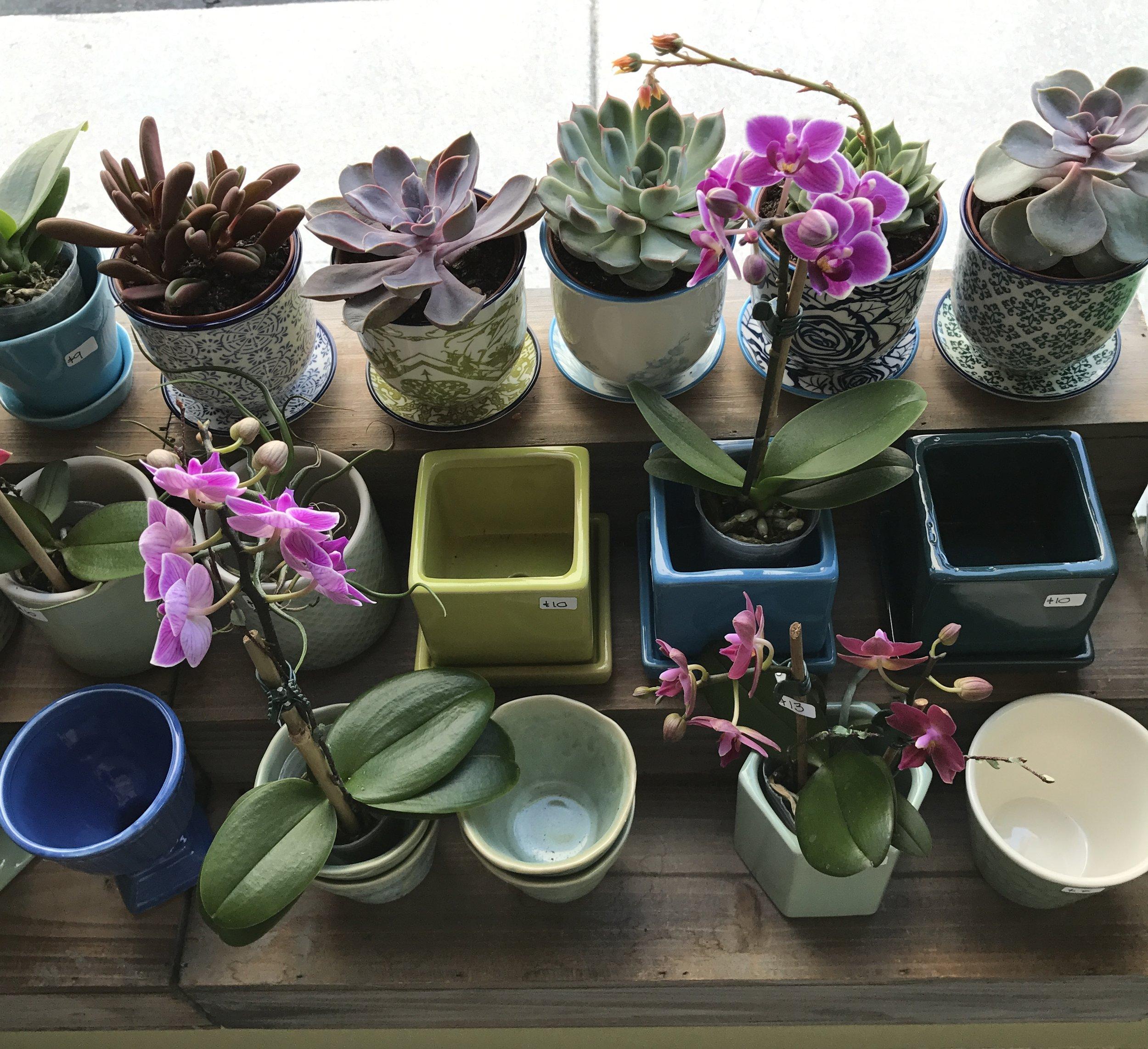 website-orchids-minis.JPG