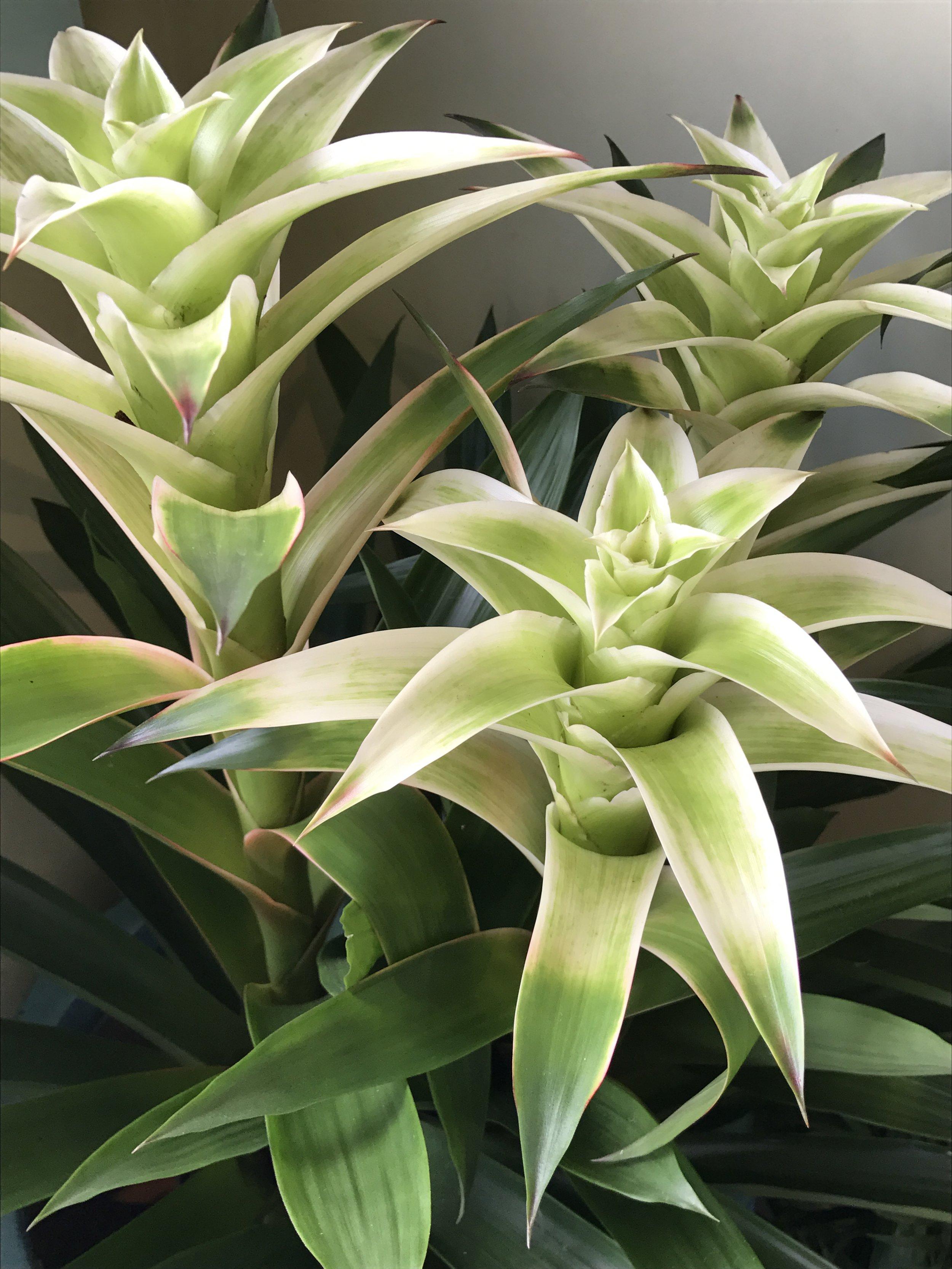 website-orchids-romwhite.JPG