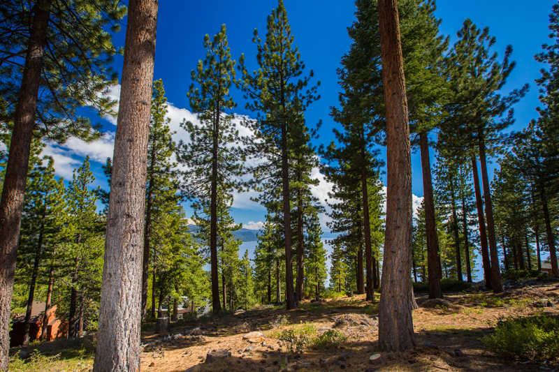 Lake_tahoe_woods_NV_CA.jpg