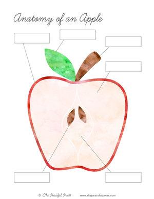 Tree Unit aple anatomy thumbnail.jpg