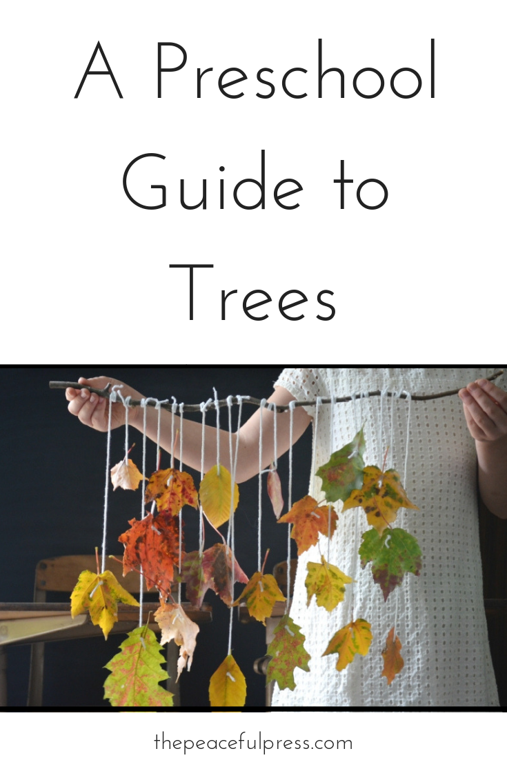 Enjoy this 4 week breakdown of A Preschool Guide to Trees!