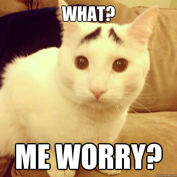 worry cat.jpg