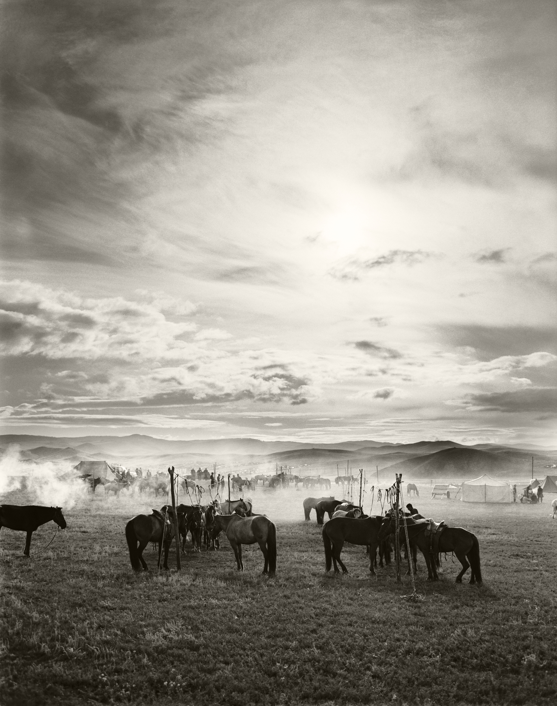 LANDSCAPE IN MONGOLIA WITH HORSES