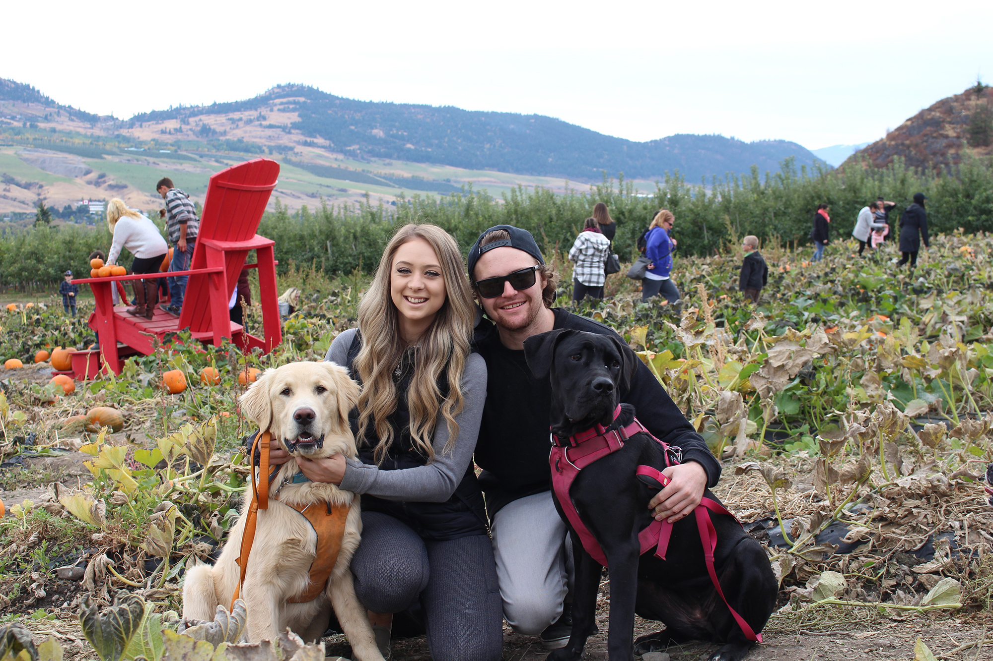 Myself and my girlfriend Sam with our 2 pups! (Bam Bam is the golden on the left and Aspen is the black one to the right :D)