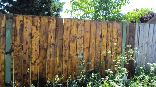 Wood fence (wet) - after