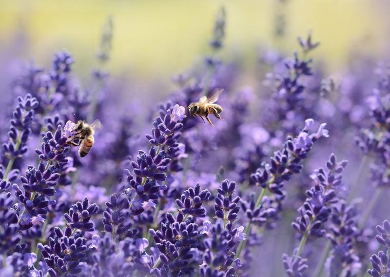 Allergies Photo.jpg