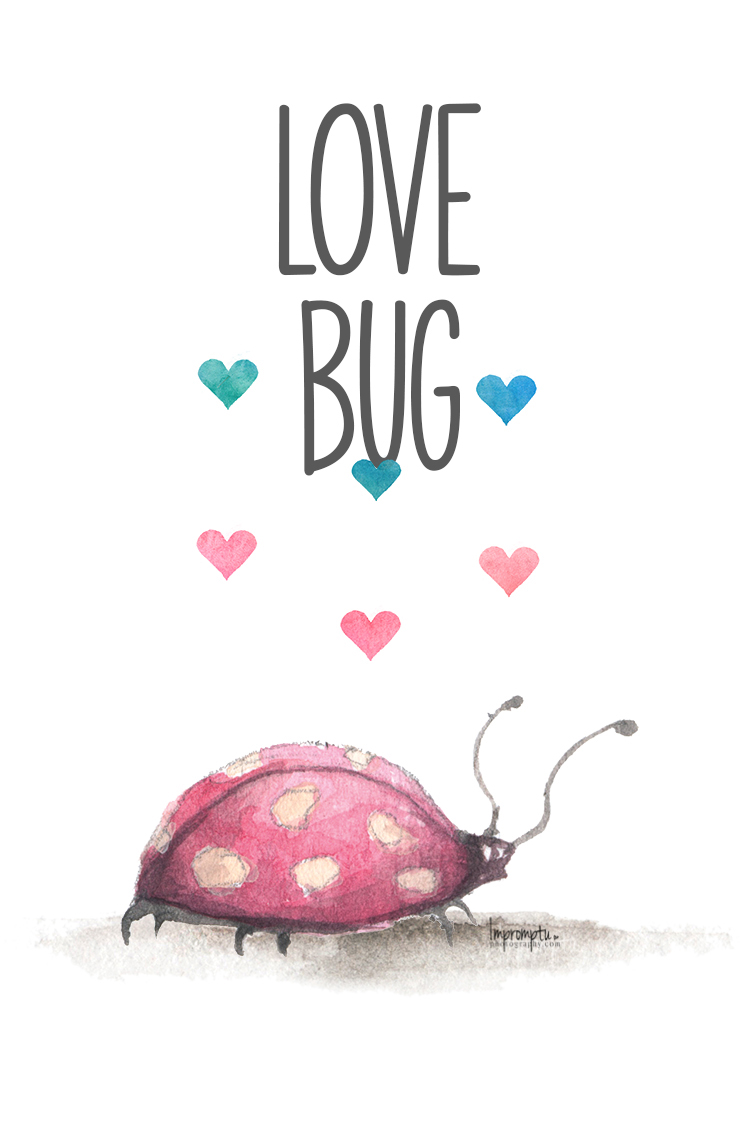 Love Bug.jpg