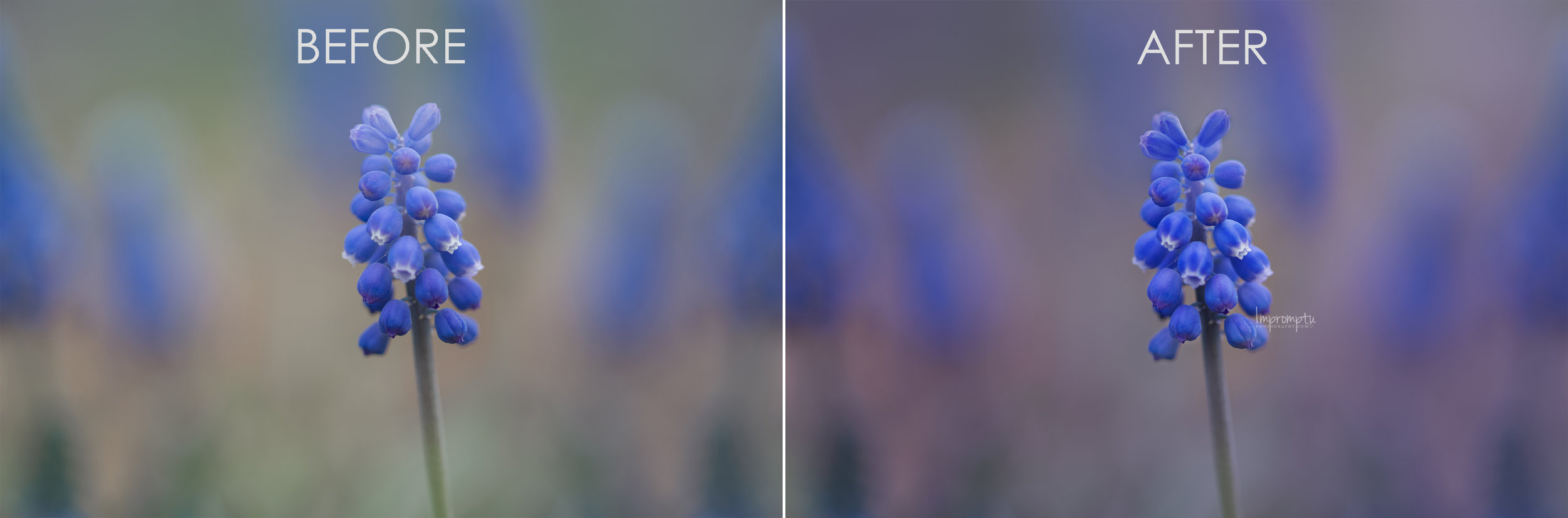Before and After Horizontal BlueBell.jpg