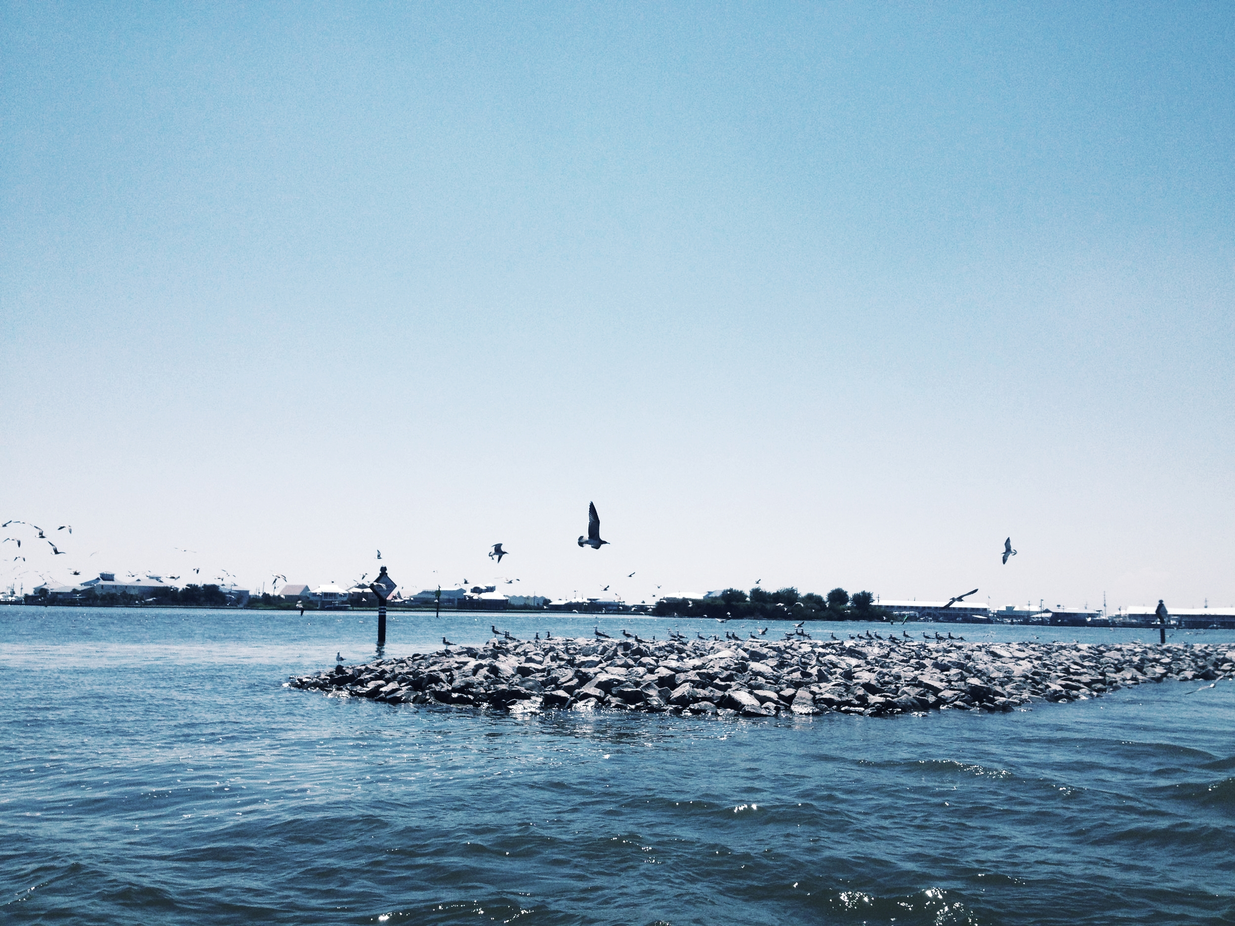 Fifi Island2-min.JPG