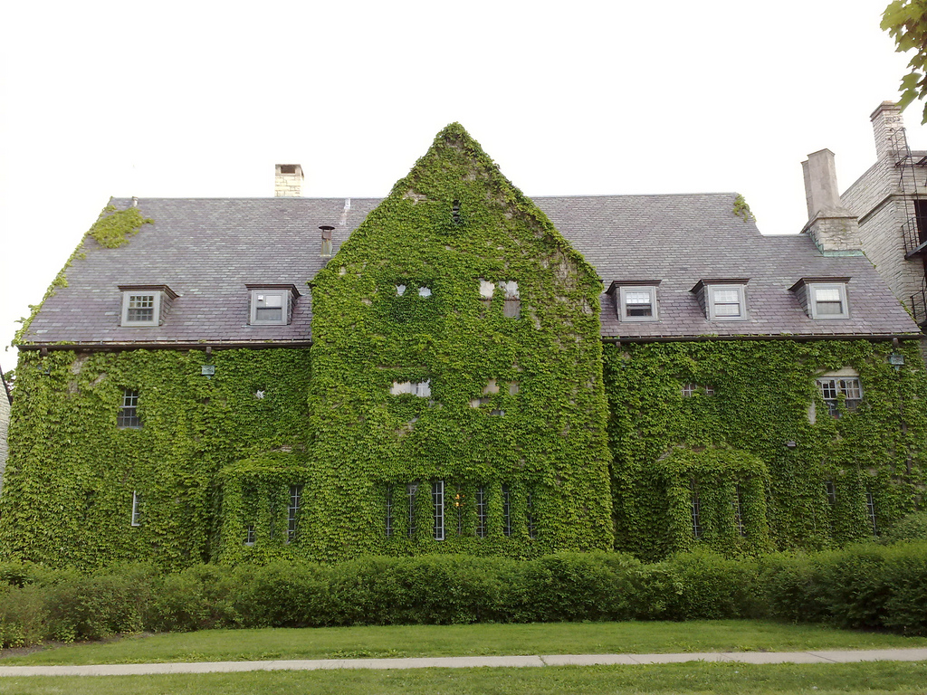 house ivy