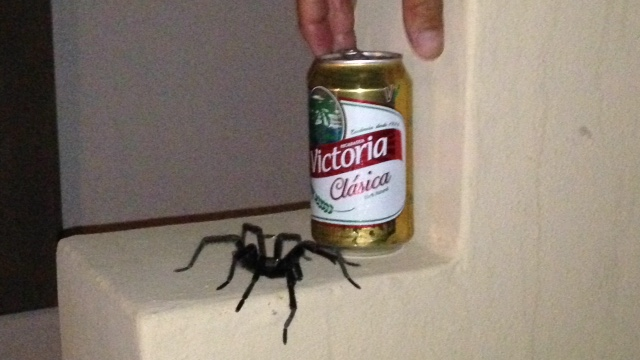 No, the giant tarantula would not share!