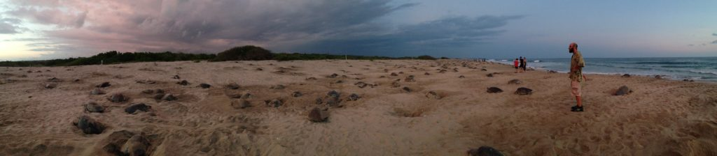 The most spectacular natural phenomenon that we witnessed: a mass nesting of the Olive Ridley sea turtles in Playa la Escobilla, Oaxaca, Mexico.