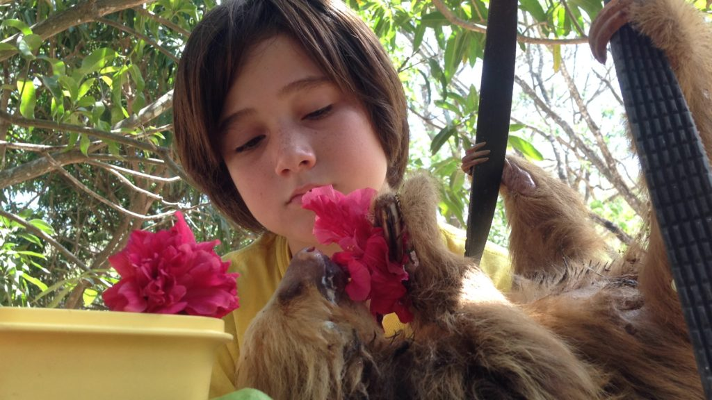 At our campsite in Costa Rica, J watches a rescued sloth eat the hibiscus flowers he gathered for it.