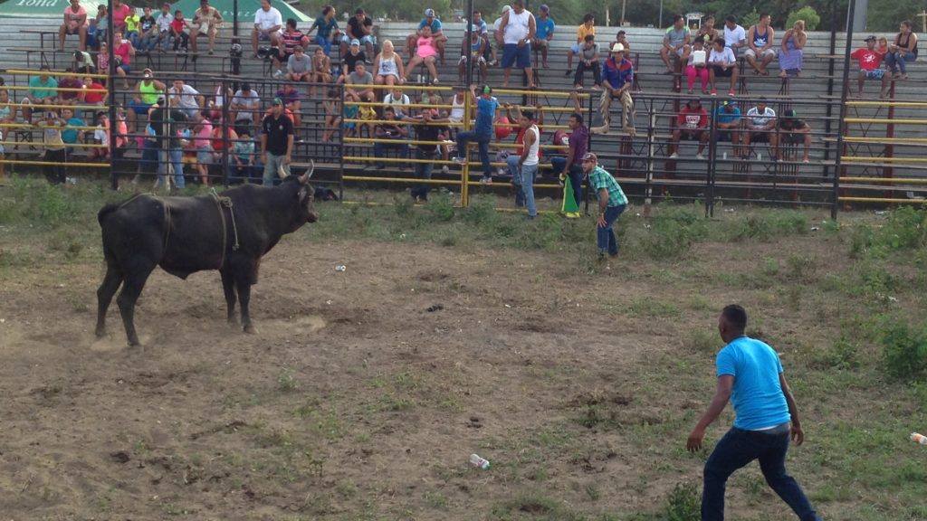 In Nicaragua, you too can be mauled by a bull.