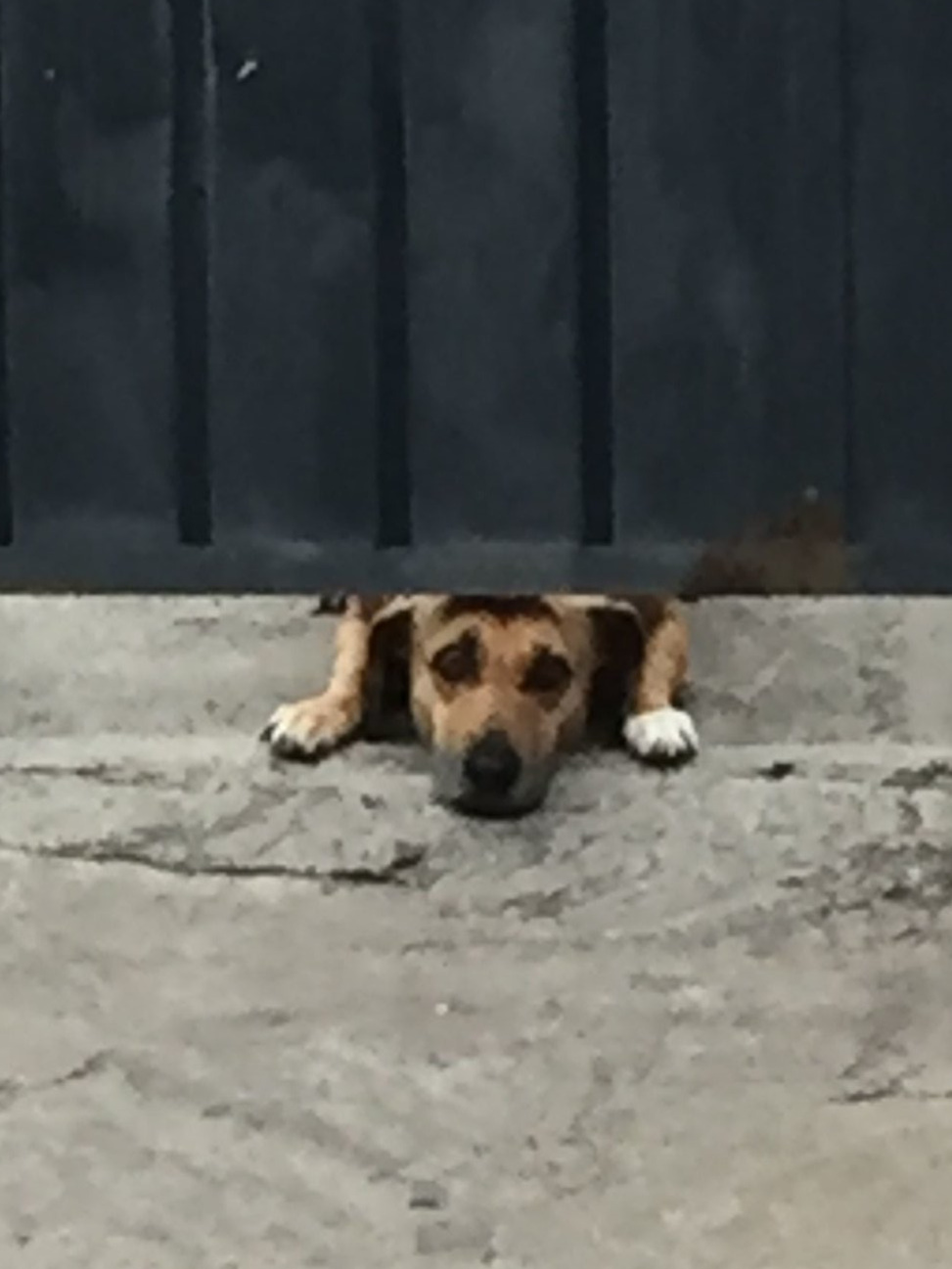 Sad or scary? This dog has enough space under the garage door to peak out and see who it is barking at.