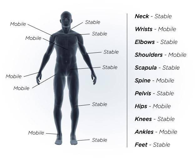 body-parts.jpg