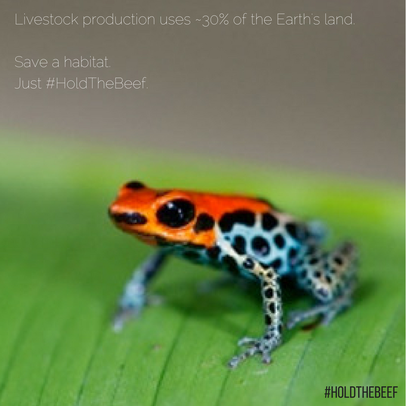 Habitat frog.png