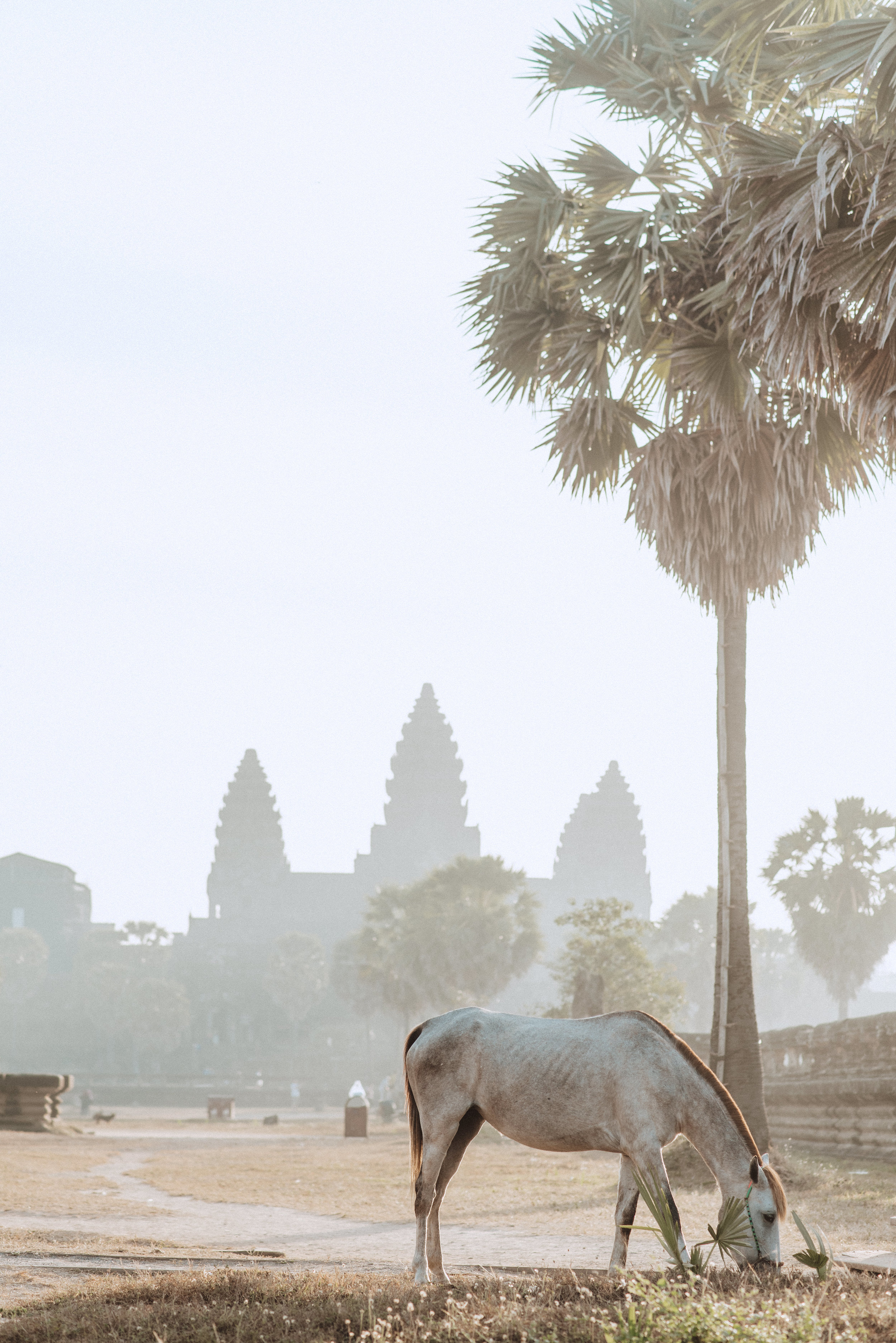 Cambodia -959 horse.jpg