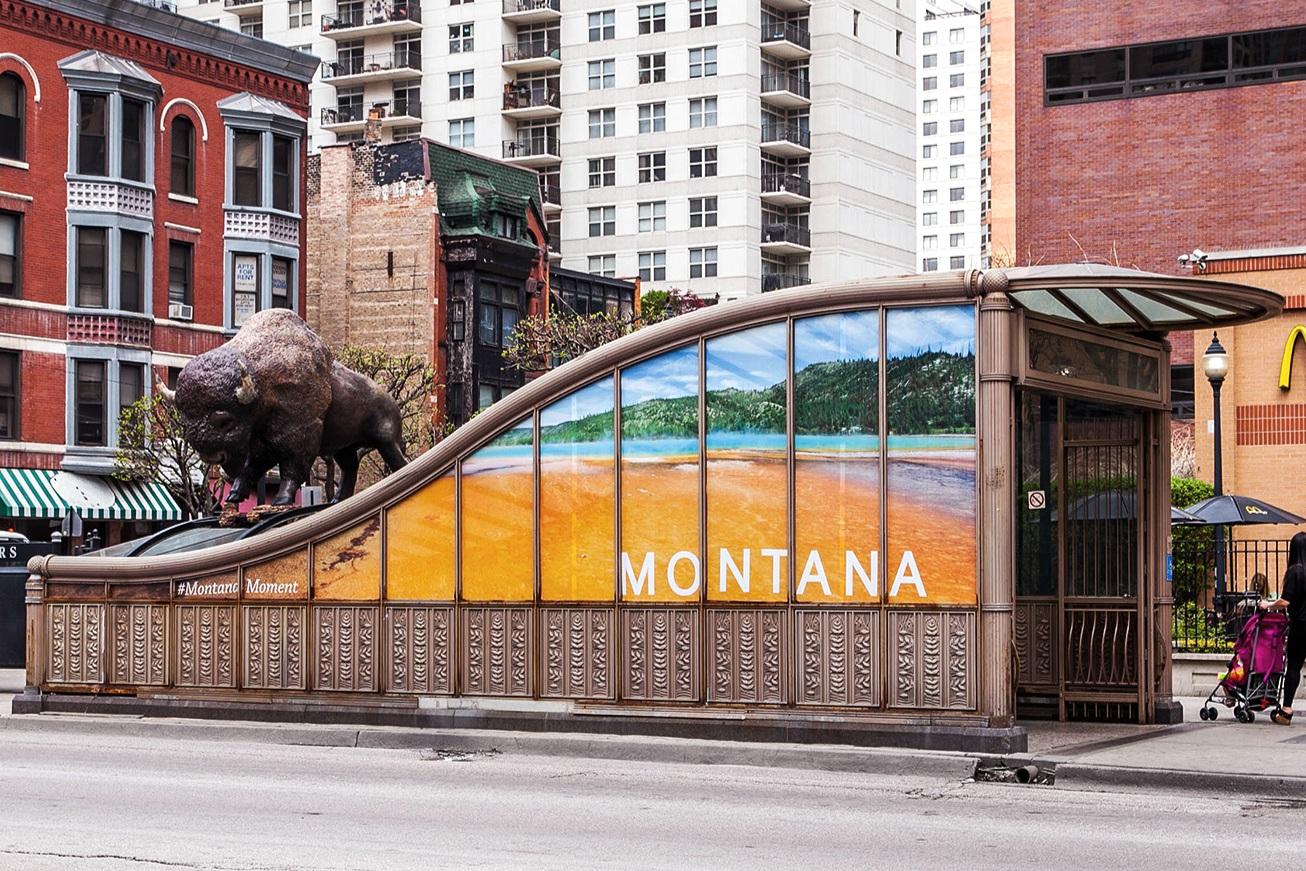 Montana Moment Bison | Chicago