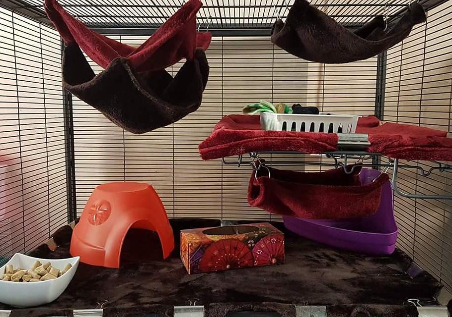 food dish, hut, tissue box, litter box, play box, 3 hammocks.