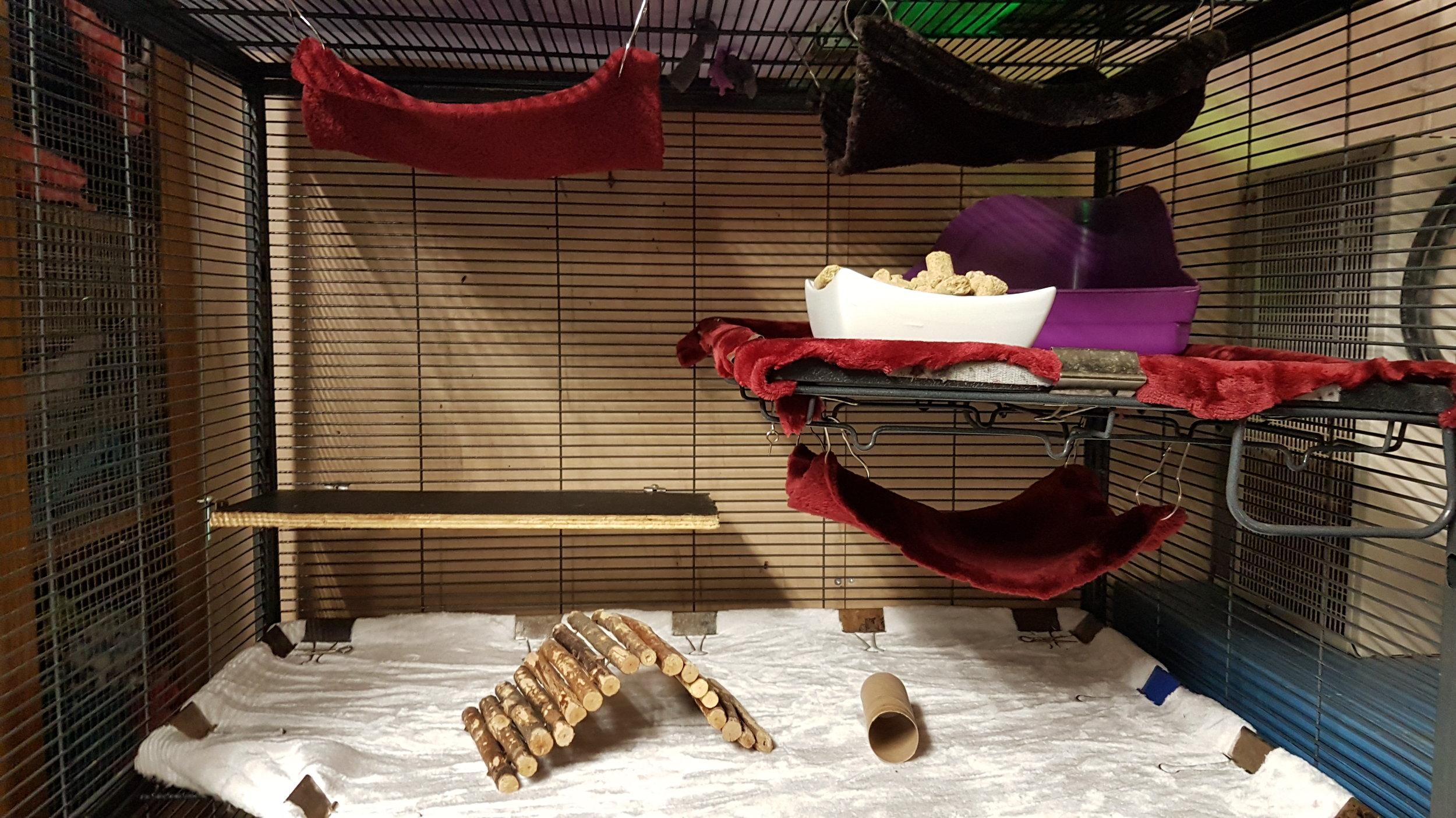 An extra wooden shelf, a wooden hut, toilet paper roll, hammocks, food dish, litter bin
