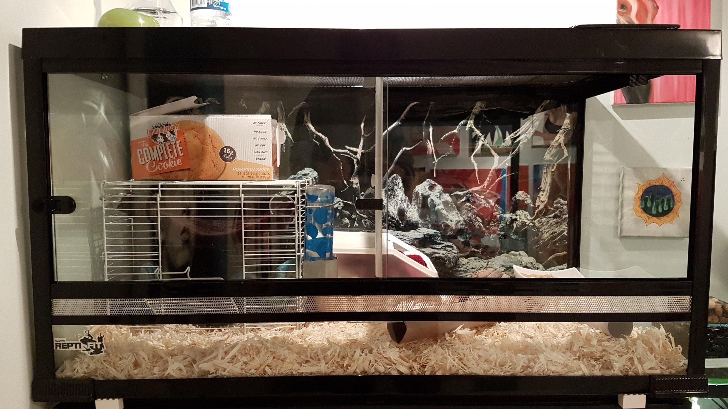 terrarium converted into rat home