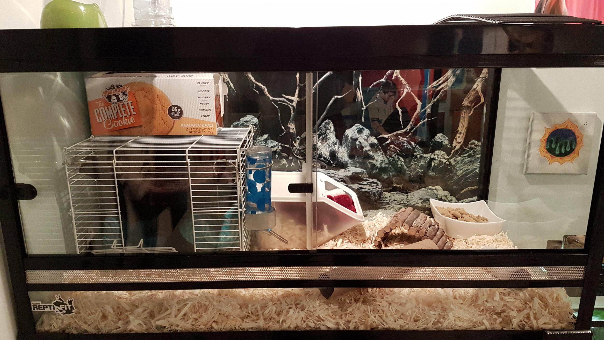 terrarium converted into rat cage