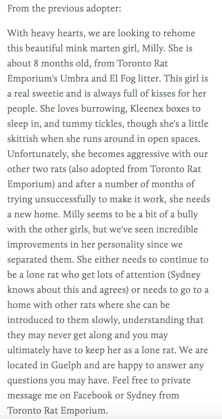 female mink marten dumbo rat