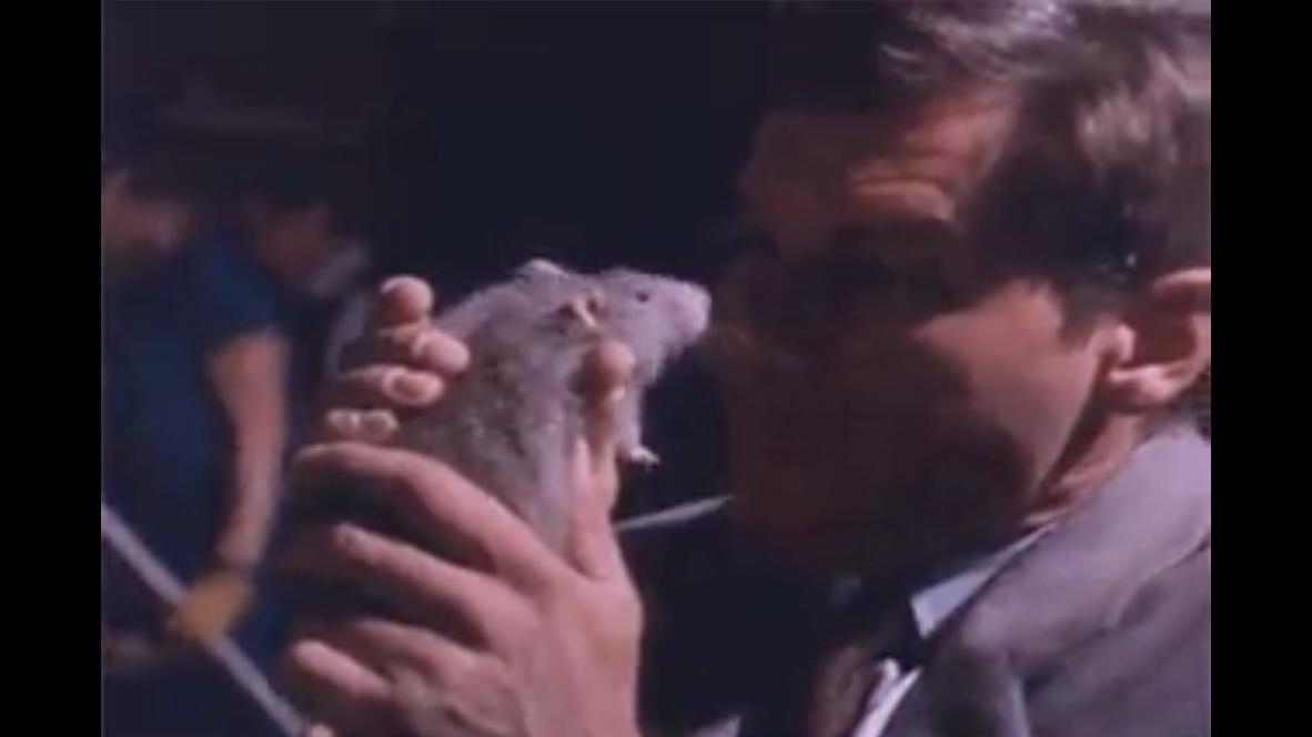 Harrison Ford cuddling a pet rat - Rat Emporium Toronto blog post
