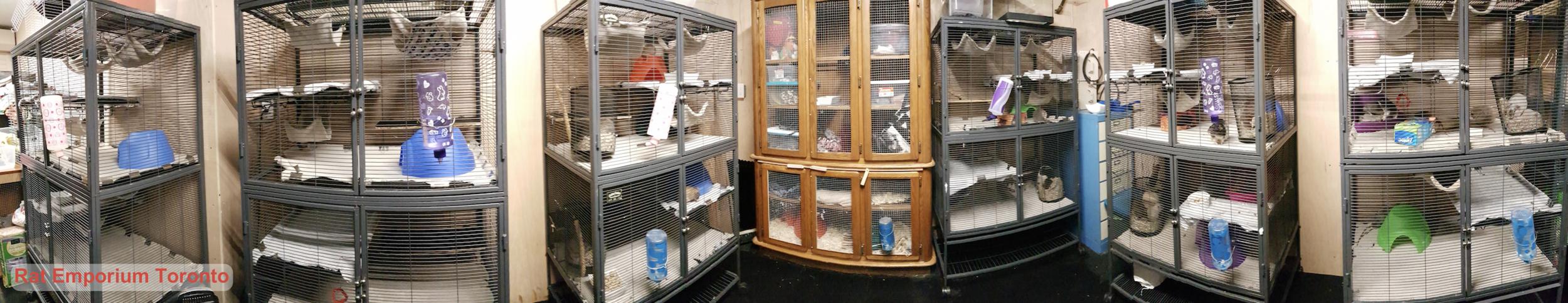 Rat Room - rat cages - rat cage set up - rat breeding - Rat Emporium Toronto