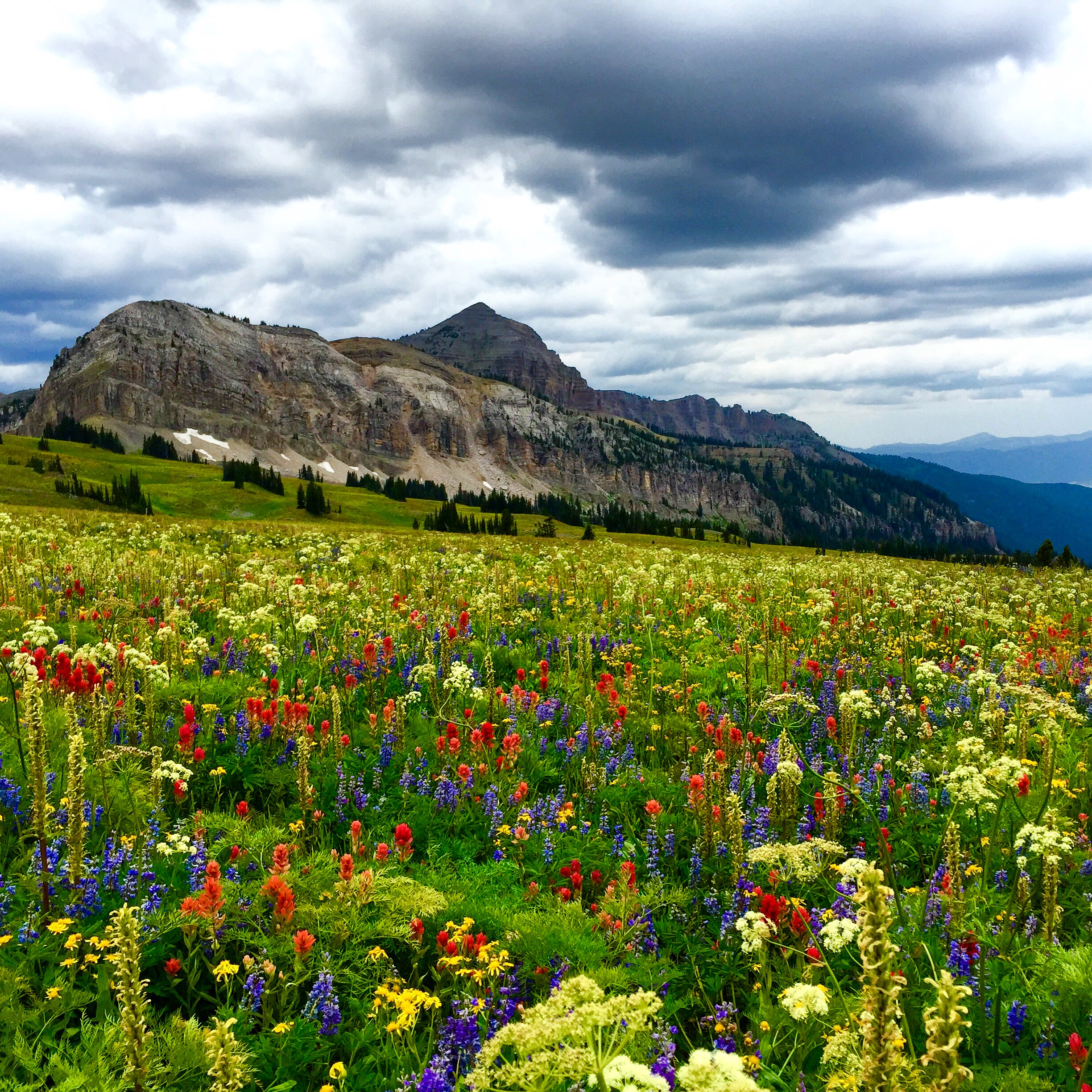 Wildflowers are at peak towards the middle and end of July.H