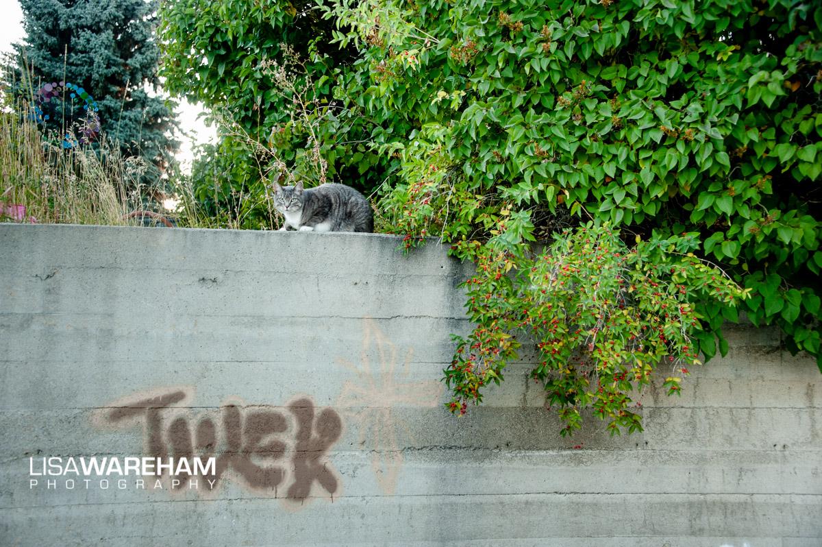 cat-in-Butte-MT