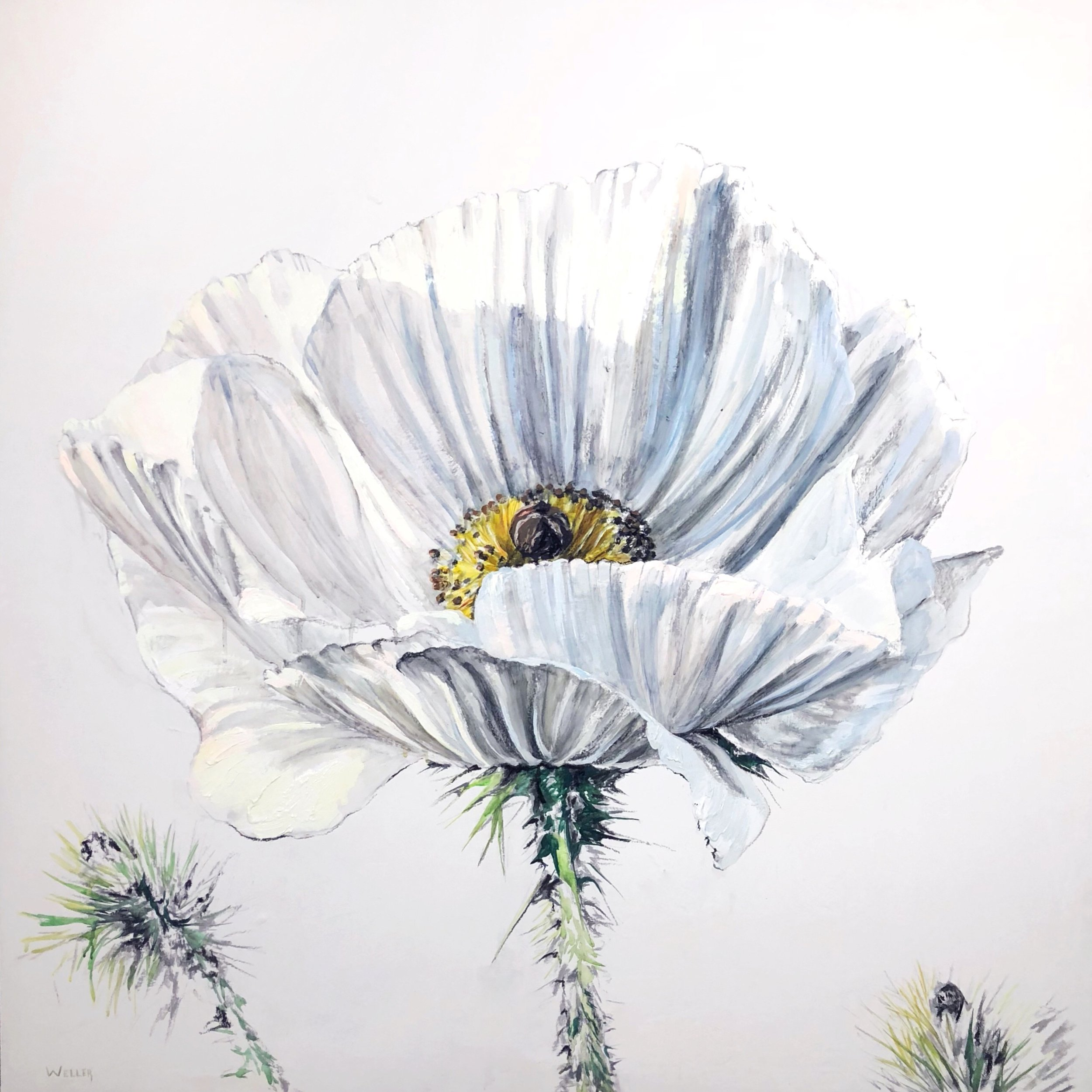 "Texas White Poppy   Portrait    48x48""  Acrylic on Canvas  Available."