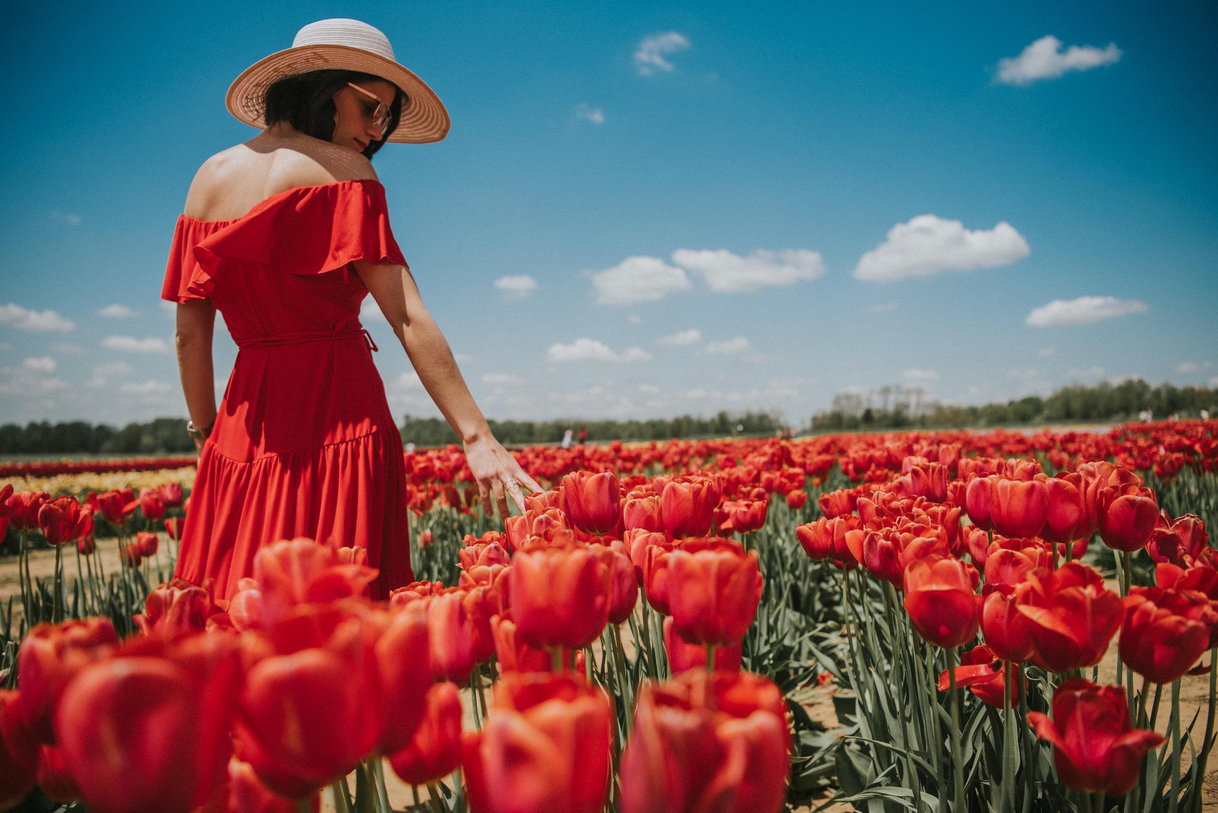 Tulips-50.jpg