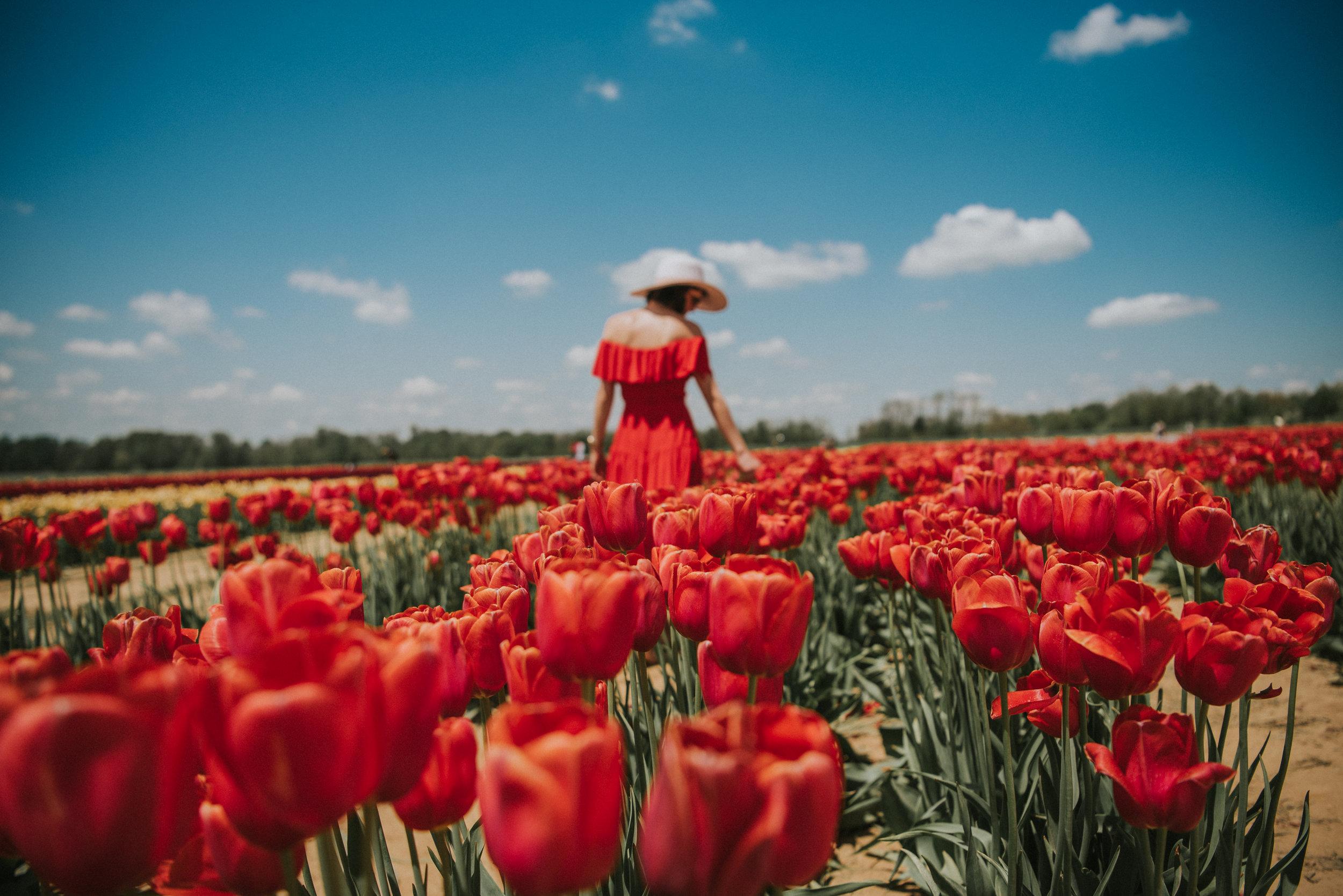 Tulips-52.jpg