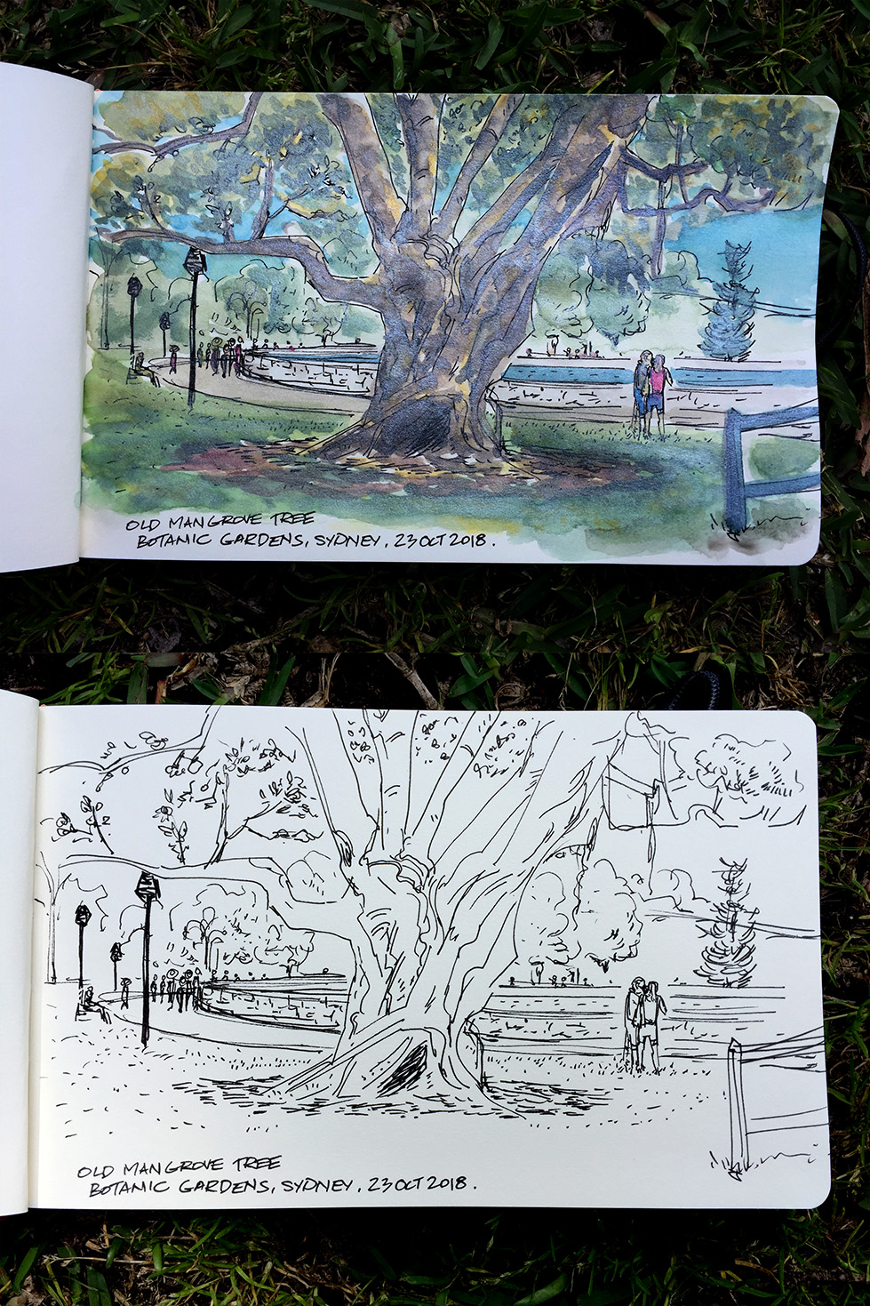 Under the Old Mangrove Tree at the Royal Botanic Gardens, Sydney.