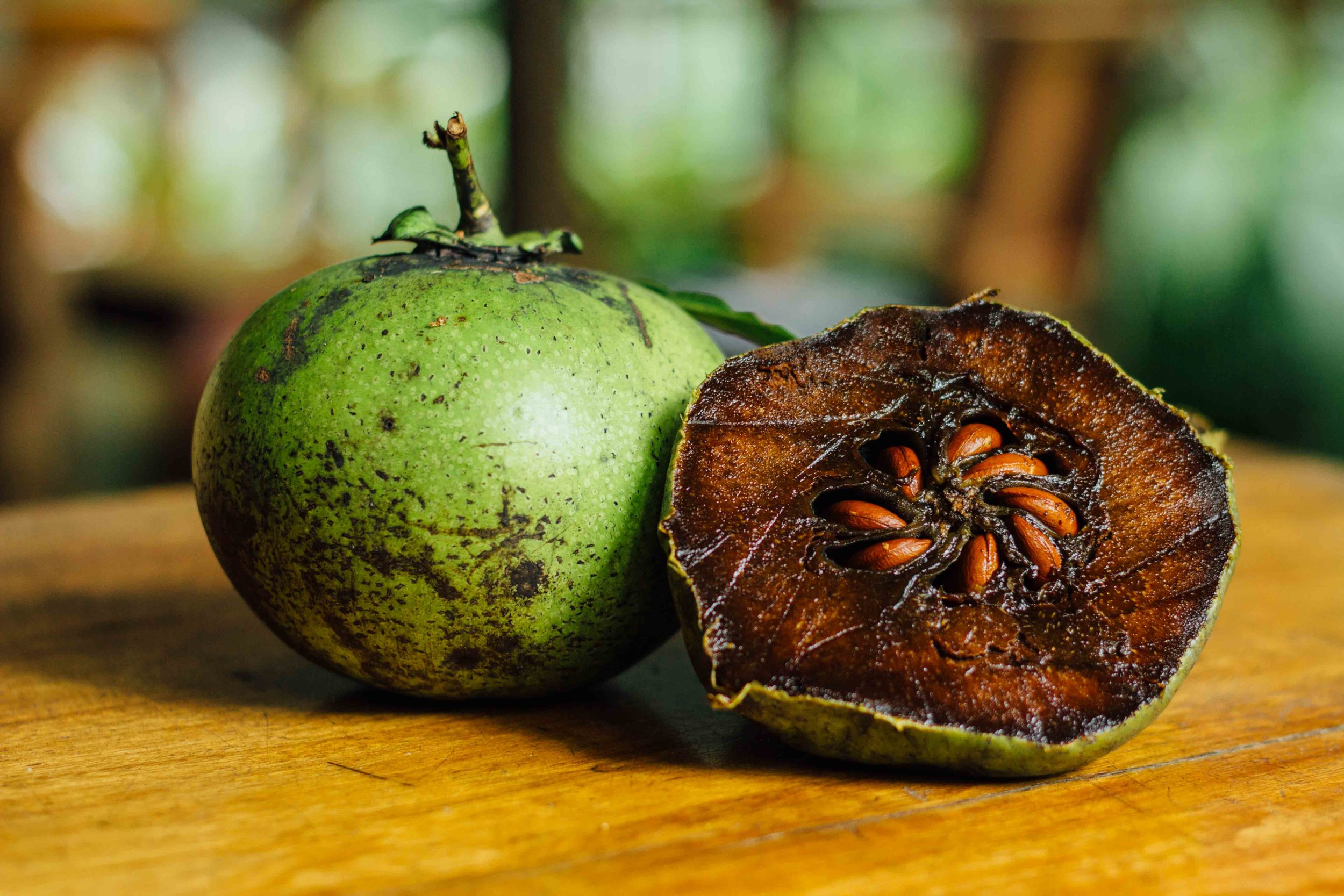 wildwood exotic fruit black sapote