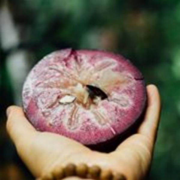 Clare@capetribexoticfruitfarm