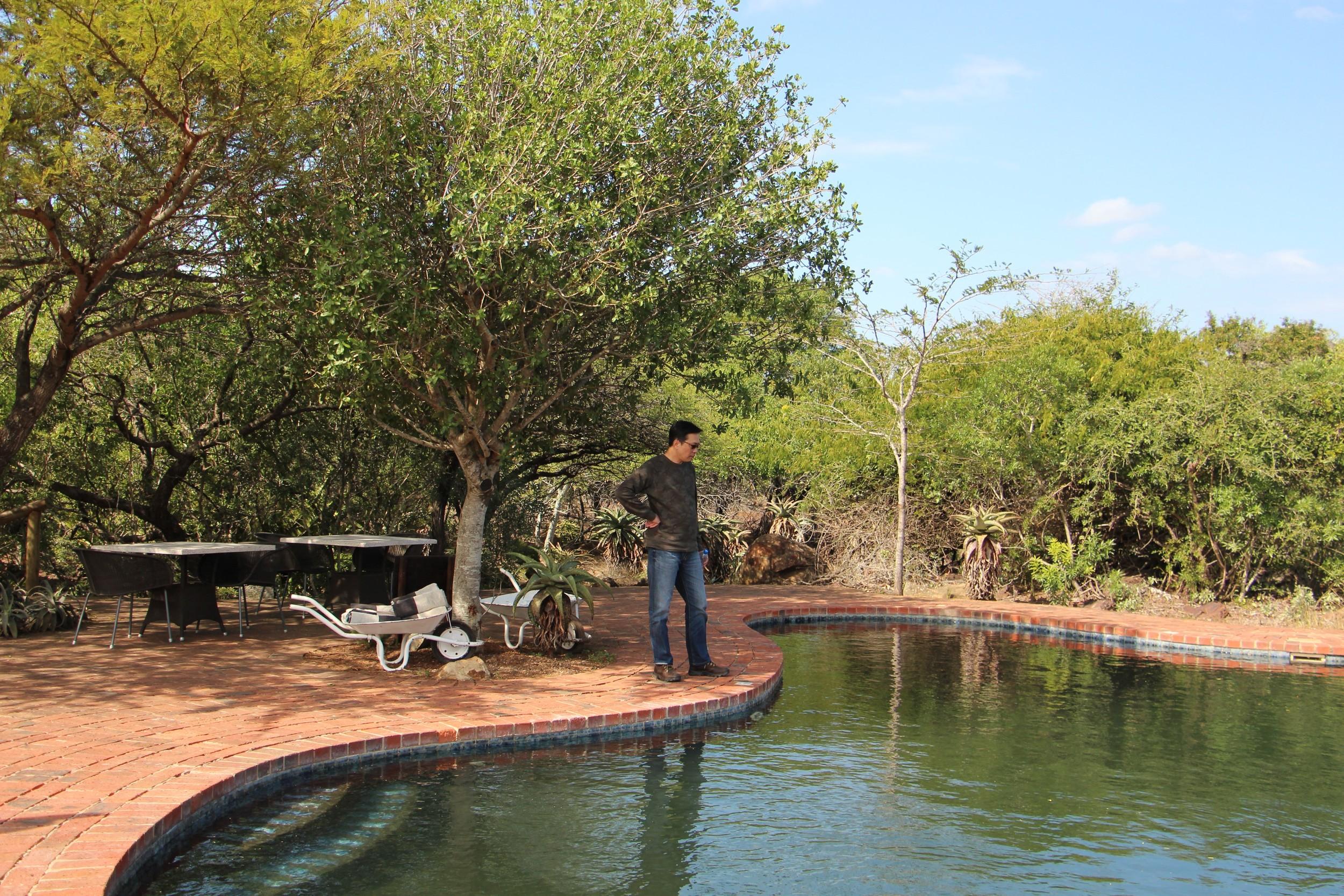 phinda pool