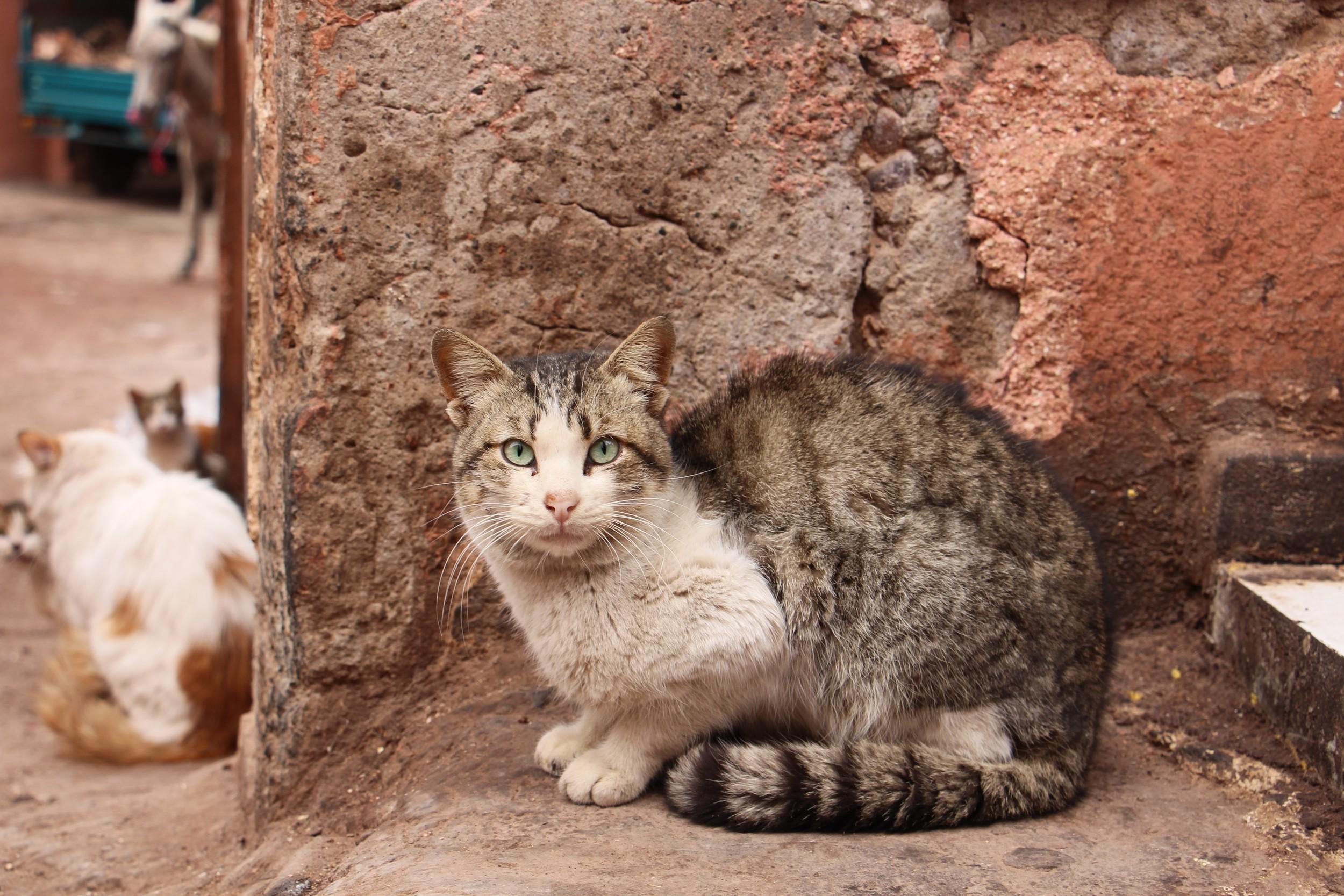 photogenic marrakesh cat