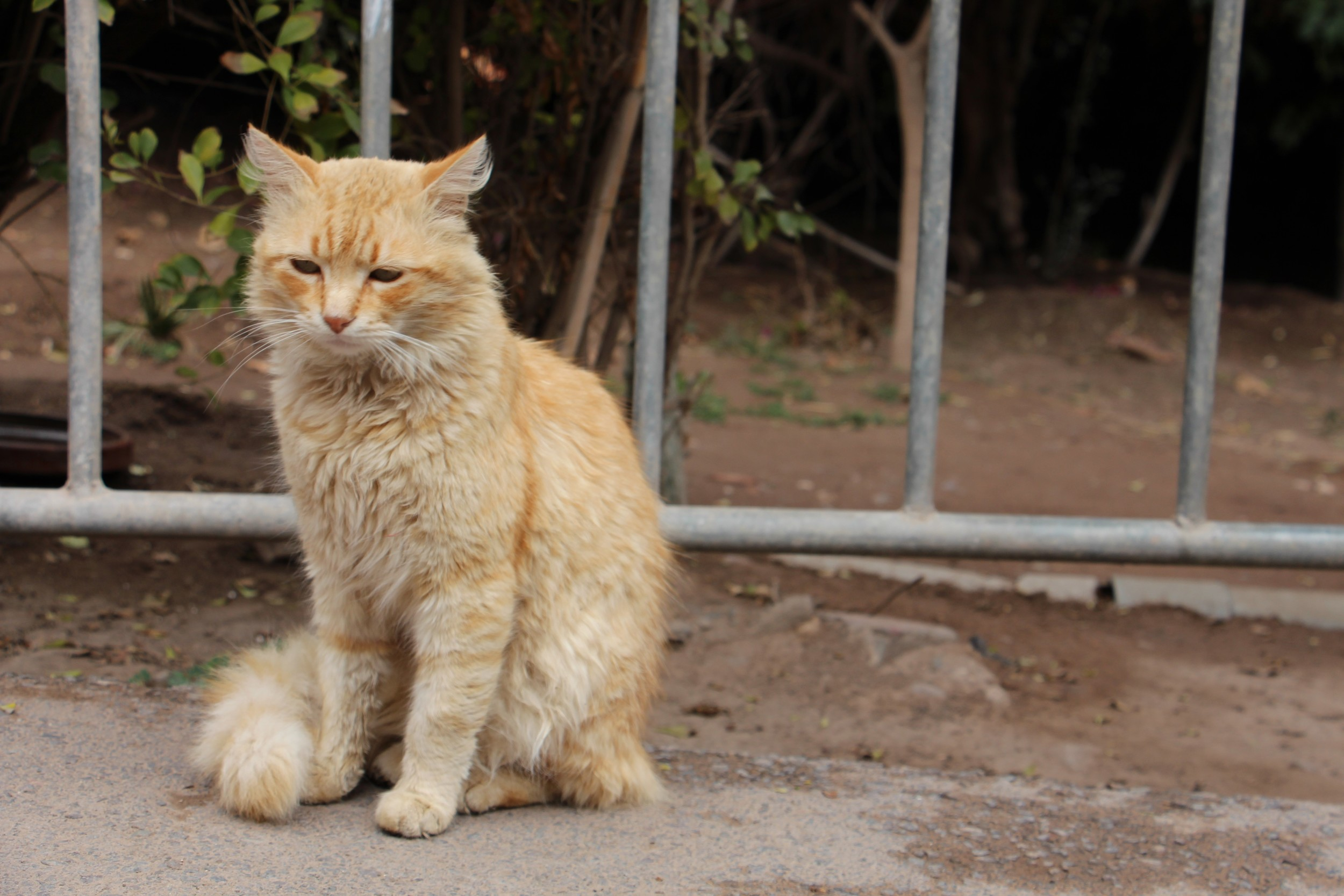 unimpressed cat bahia palace