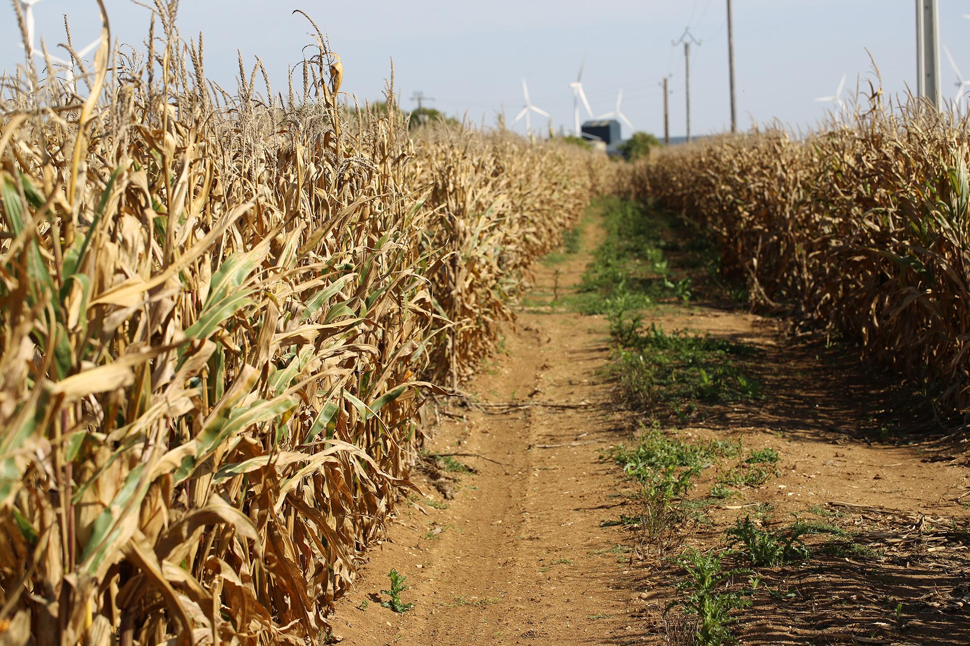 Verticales : maïs, poteaux télécom, silos, éoliennes...