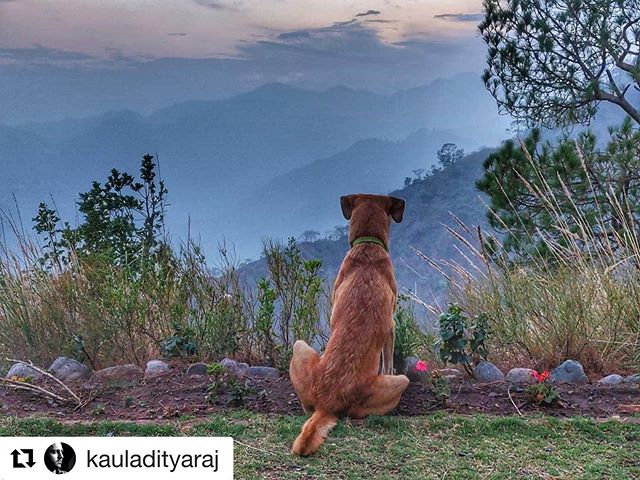 #Repost @kauladityaraj with @get_repost ・・・ Aalu enjoying the sunset at @naveens_glen in Sattal.
