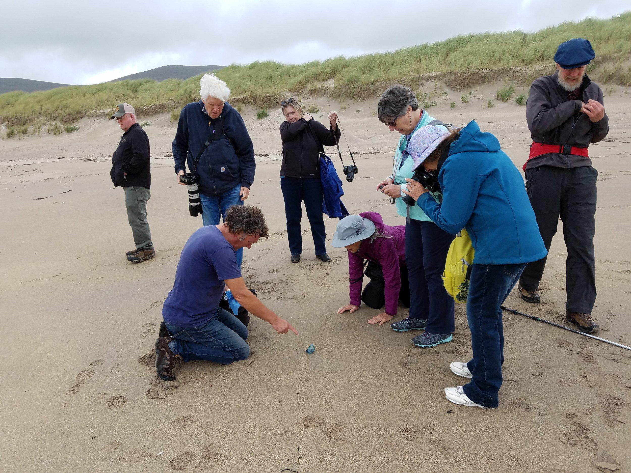 vincent hyland points to a portoguese man o' war on derrynane beach.
