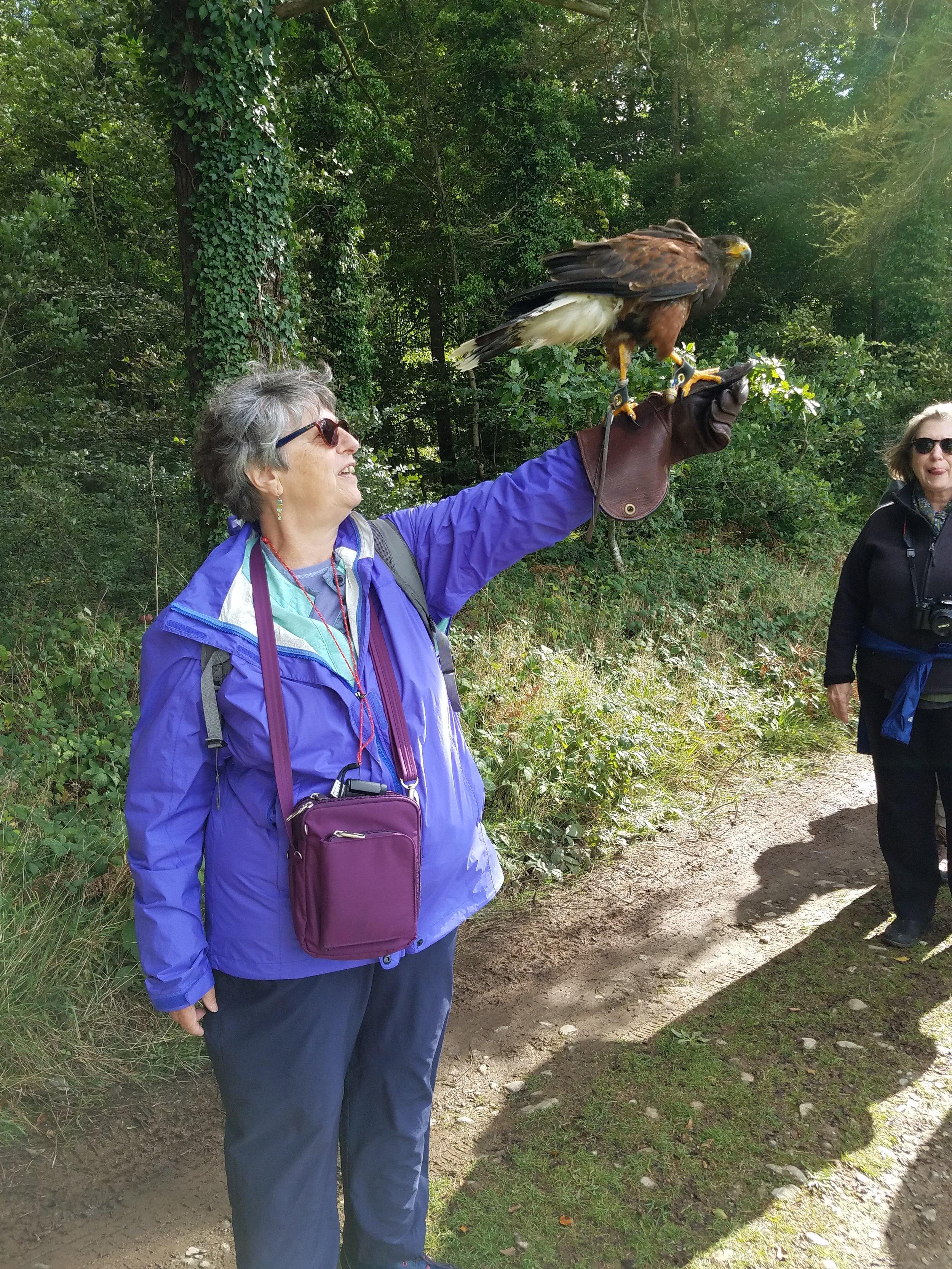 Diane with a harris hawk on the Falcon walk.