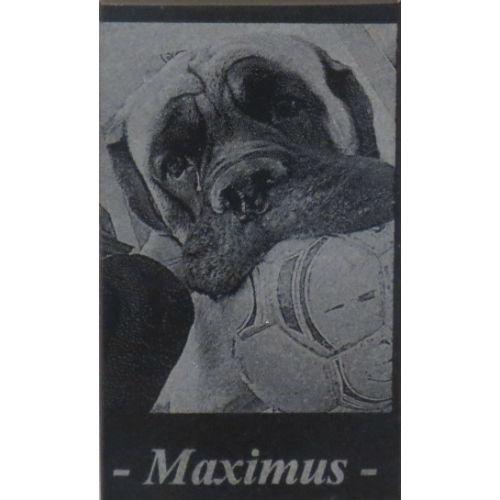 Best Friend Max