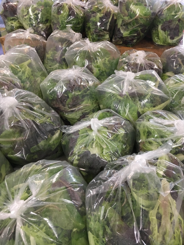Lettuce harvest!