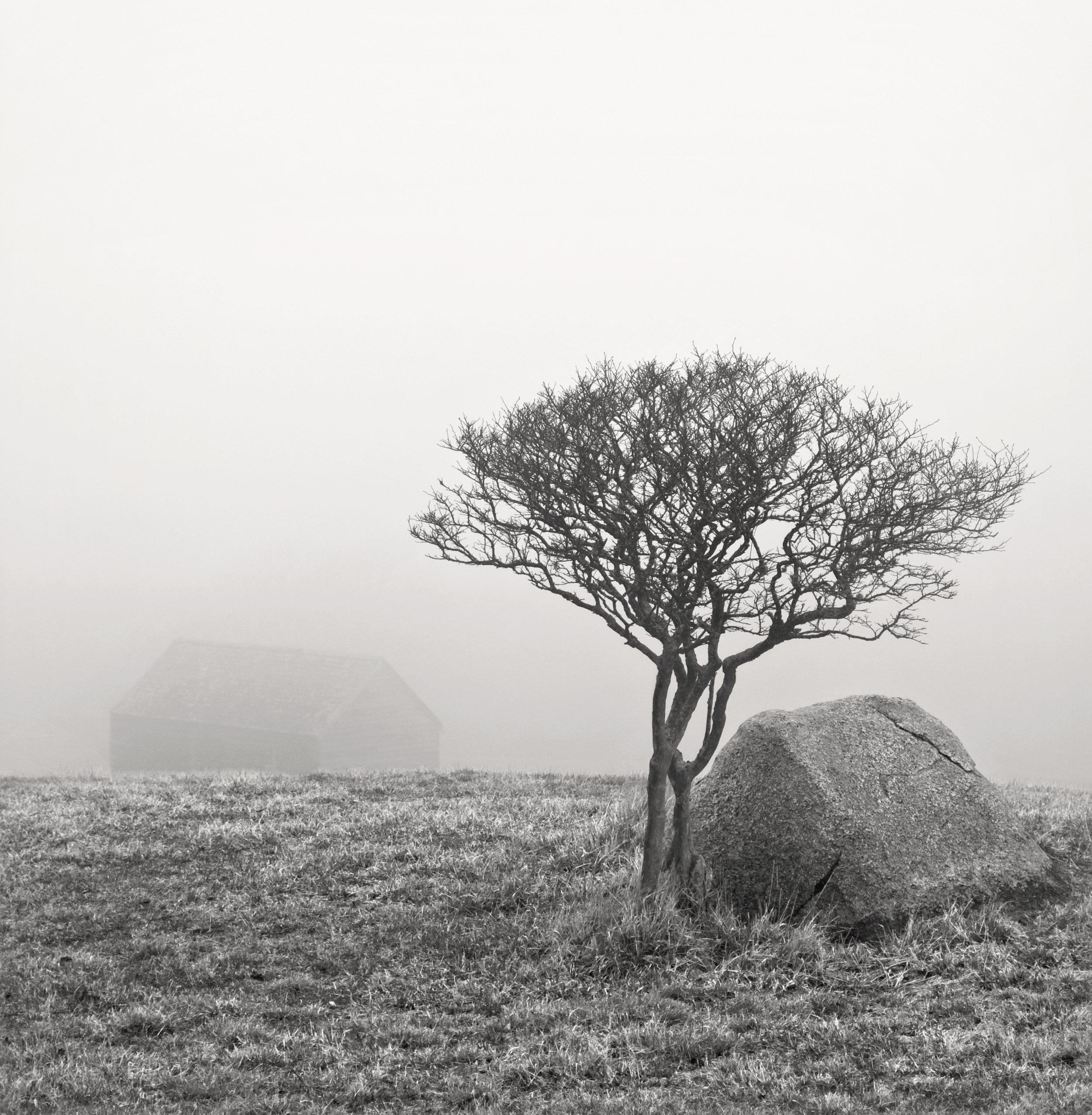 Barn Tree Rock (Allen Sheep Farm)